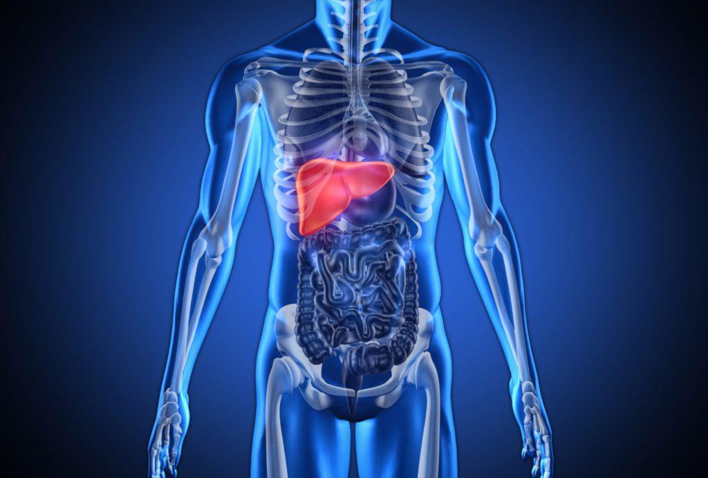 El 30% de los adultos chilenos tiene hígado graso y un tercio de ellos agravará su condición
