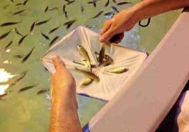 Corfo lanzará programas tecnológicos de diversificación acuícola