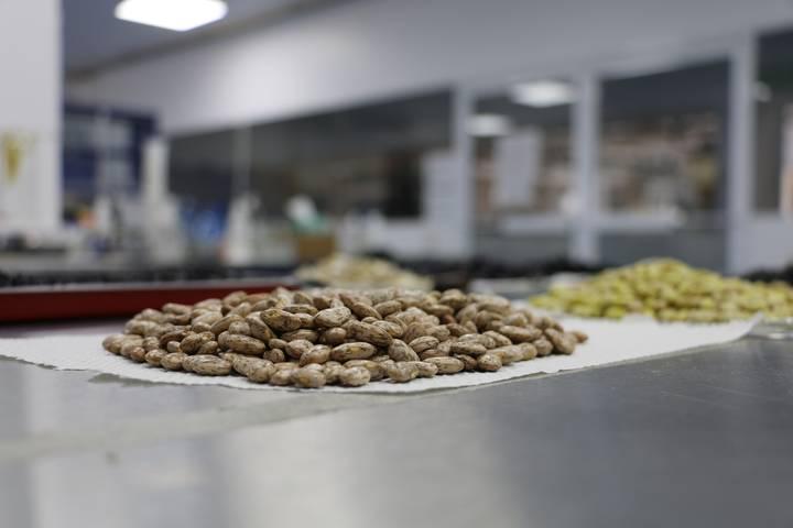 El renacer de las leguminosas en la dieta de los mexicanos